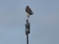 In fact, birds like this falcon find our test equipment most useful